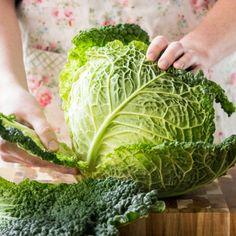 Gemüseguerilla Wirsing_featured