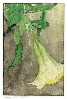 Datura, woodblock: Edna Boies Hopkins, 1909.