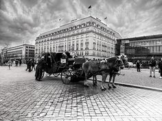 Horses Photograph - Horses At Brandenburg Gate by Cuiava Laurentiu Brandenburg Gate, Weekender Tote, Wood Print, Beach Towel, Berlin, Photograph, Horses, Wall Art, Photography