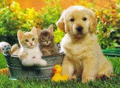 Dog And Cat          <3