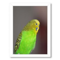 Americanflat 'Green Budgie Bird Parrot' Framed Photographic Print