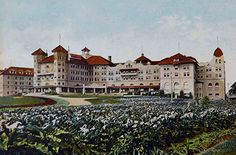 The calla lilly's are in bloom in front of the sprawling hotel Potter in Santa Barbara.