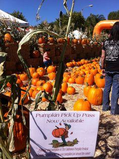 Pumpkin PickUp (Halloween fun in Calabasas, California)