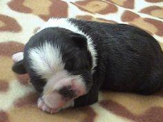 JoBie & Co. Pet Owner in Henderson NV on PetsUnlimited