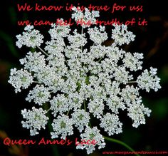 Queen Anne's lace essence has a grounding effect on intuition . Guidance comes from how we integrate our information, and this essence aligns the guidance process by cleansing and purifying any imbalances in the system. The result is trueness to what we see. We know it is true for us; we can feel the truth of it.