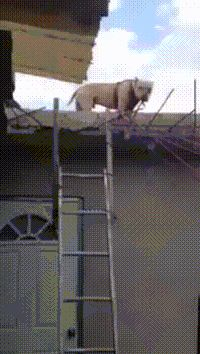 Discover & Share this Dog GIF with everyone you know. GIPHY is how you…