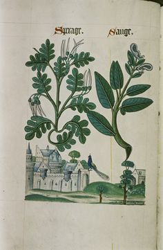 Image result for the tudor pattern book