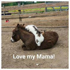 ctsuddeth.com :donkey baby love