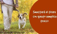 Far smettere il cane di tirare il guinzaglio: ecco un semplice trucco