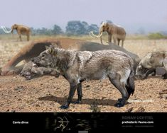 7 best la brea tar pits images dire wolf fossils los angeles rh pinterest com
