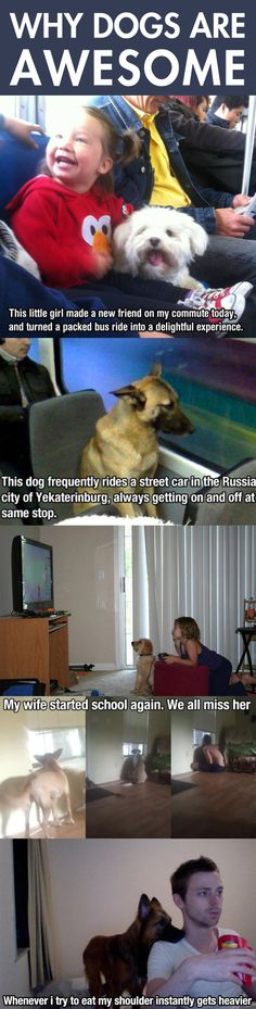 Dogs Are My Favorite People...Right in the feels...right in the balls of my feels!!