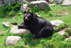 West Virginia State Wildlife Center #family