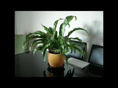 Abono Casero para Nuestras Plantas - YouTube