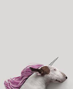 The Unicorn - Jimmy Choo & Rafael Mantesso Amor Animal, Mundo Animal, Animals And Pets, Funny Animals, Cute Animals, Foto Blog, English Bull Terriers, Dog Names, Dog Photos
