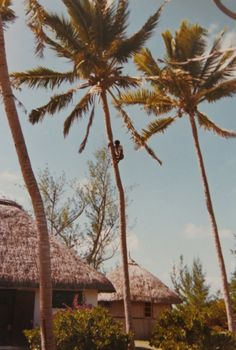 Characters 2 -Know your Characters inside out | 3min-Write-To-Start-My-Day Photoblogs |Sophie Cayeux Photo: Climbing the coconut tree to collect coconuts in #Mauritius.