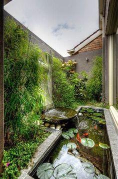 Point d'eau et de verdure / plant, outdoor and water
