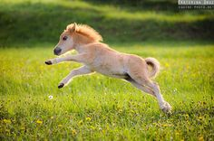 Ahh! What a big leap for such a little pony, so precious
