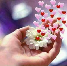 Flowers Gif, Hand Flowers, Good Morning Messages, Good Morning Quotes, Beautiful Day Quotes, Beautiful Pictures, Funny Jok, Romantic Gif, Good Morning Love