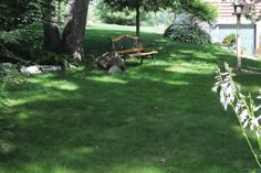 No mow grass is a reality. HouseLogic lists grass alternatives that give you a lawn but without the high maintenance of mowing and watering.