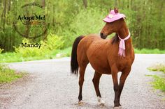 Mandy is a 15 year old 14.1hh Arabian X Bay mare with a star and snip and two hind socks who is currently available for adoption at circle f horse rescue.  If you would like to learn more about her please  contact circle f horse rescue at www.circlef.ca ©paws and tails pet photography 2013 http://www.pawsandtailspetphotography.com/
