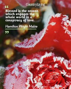 """""""Blessed is the season which engages the whole world in a conspiracy of love."""""""