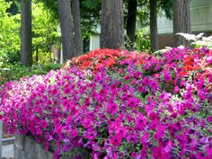 8x10 Photo Colorful Petunias Floral Purples Reds by LeetahsPlace, $15.00