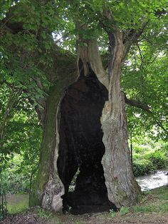 All Nature, Amazing Nature, Science Nature, Giant Tree, Big Tree, Lightning Photography, Nature Photography, Weird Trees, Mystical Forest