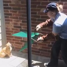 Catch me if you can - Funny Cat Videos & Funny Cat Memes - Cat Funny Video Memes, Funny Animal Memes, Funny Animal Videos, Cute Funny Animals, Funny Animal Pictures, Cute Baby Animals, Videos Funny, Humor Videos, Funny Babies