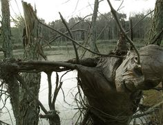 Bog Man 1 ~does this not look real or what! Another beautiful creation by pumpkinrot