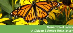 MonarchNet Newsletter | News | News & Events | The Monarch Joint Venture