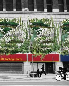 #ClippedOnIssuu from Vertical Gardening in a Northern City; Speculations for Winnipeg