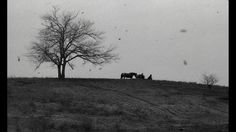 The turin horse by Béla Tarr