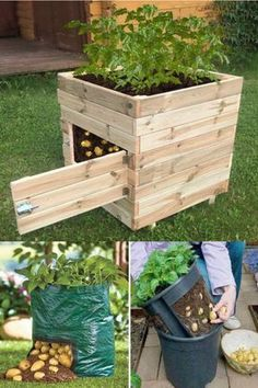 Growing potatoes in an apartment: how to do it? Planting Vegetables, Growing Vegetables, Veggies, Raised Garden Beds, Raised Beds, Potager Palettes, Vegetable Garden Design, Vegetable Gardening, Garden Boxes