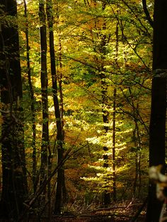 GERMANY forest tree autumn