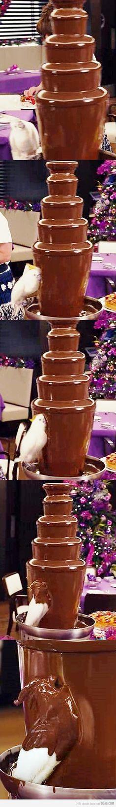 parrot's chocolate addiction