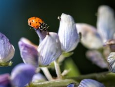 Mike's Spot - Creativity through Exploration: Around the Lupins - by Spokane Photographer Mike B...