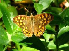 Macro/Butterfly *