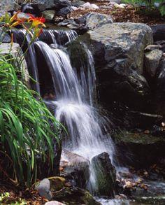 Backyard Ponds. http://extremehowto.com/backyard-ponds-get-a-makeover/