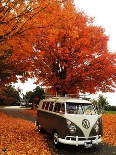 KOMBI NATURE..Re-pin brought to you by #OregonInsuranceagents at #houseofinsurance in #EugeneOregon