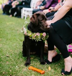 Fur child ring bearer. This gorgeous chocolate labrador looks lovely in her floral wreath!