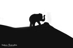 Nude of Elephant by Kasun Shanaka on 500px