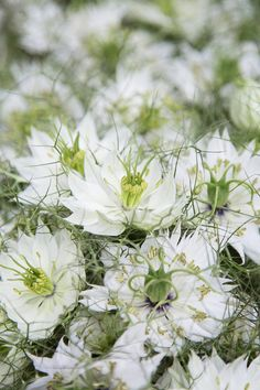 Filler flower or the main event, adding these delicate but important blooms will help you customise your display. Head on over to our blog to view. #wholesaleflowers #flowerwholesaler #bonbloemen #flowers #flowersupplier #delicateblooms #delicateflowers #forgetmenot #nigella #loveinamist #astrantia #waxflower #plantsupplier #plantwholesaler #gardenflowers #flowers #floral #northeast #floristry #flowermarket #slowfloralstyle #floralfix #florallove #florallife #blooms #floralphotography Astrantia, Wax Flowers, Floral Photography, Forget Me Not, Flower Market, Nigella, Floral Style, Mists, Delicate