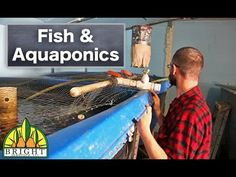 Fish and Aquaponics - Dr. Nate Storey of Bright Agrotech discusses the different components of raising your fish in aquaponics. - YouTube