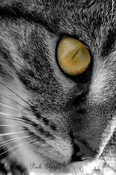 Tabby with a golden eye