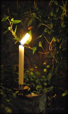 Candles:  #Candle.