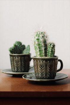 Plants in mugs