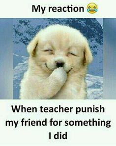 Best Friend Quotes Funny, Cute Funny Quotes, Really Funny Memes, Cute Love Quotes, Stupid Funny Memes, Funny Relatable Memes, Funny Facts, Funny Cute, Funny School Jokes