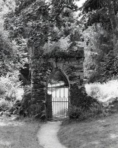 More from the National Botanic Gardens in Wicklow. Shot on Bergger Pancro 400 in a Canon EOS 3000v. . . . . . #bnw_demand #bnwmood #monochrome #bnw_globe #blackandwhitephoto #rsa_bnw #blackandwhitephotography #blacknwhite_perfection #bnw_captures #bnw_life #bnw_rose #aband0n_all_h0pe #grime_lords #glitz_n_grime #forgotten #ig_abandoned #ig_captures_decay #ig_urbex #beautyindecay #urbex_utopia #irland #inspireland_ #loveireland #loves_ireland #ig_ireland #staybrokeshootfilm #believeinfilm… Love Ireland, Canon Eos, Black And White Photography, Botanical Gardens, Monochrome, House Styles, Prints, Pictures, Outdoor