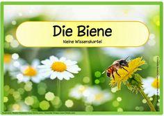 Sachunterricht in der Grundschule: Kleine Wissenskartei zur Biene