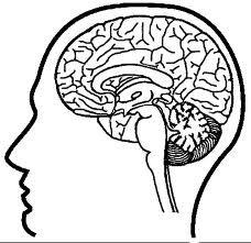 Resultado de imagen para partes de cuerpo humano internas